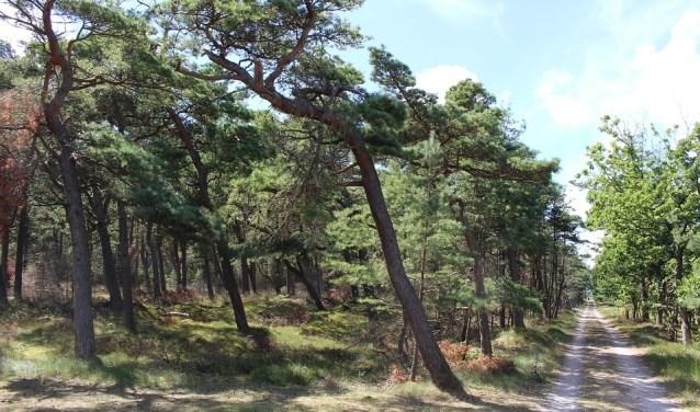 Vooral in bossen zijn de gevolgen van de droogte duidelijk te zien. FOTO: PixaBay