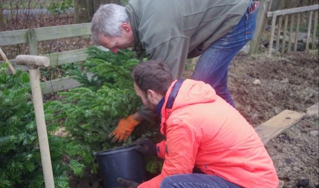Vrijwilligers van Klimaatneutraal IJsselstein hebben samen met de eigenaren heel wat kerstbomen geplant in de gemeentegrond bij de volkstuintjes. (Foto: Ymke Fotografie)