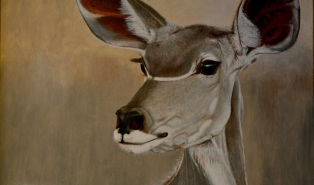 Kudu, Ton voor 't Hekke