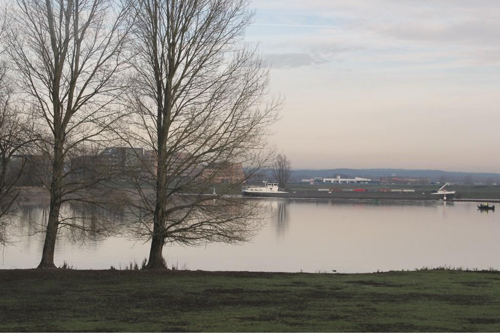Ook de bomen langs de IJssel bij Westervoort verdwijnen binnenkort.
