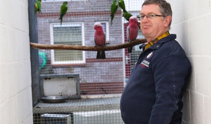 John de Valk heeft op dit moment zo'n 250 vogels. (foto: Marco van den Broek)