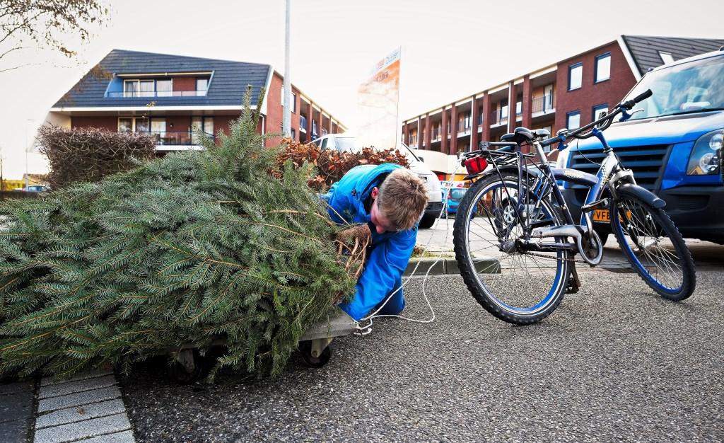 Daan (11) uit Achterberg maakt de kerstboom los van de kar.  © Persgroep