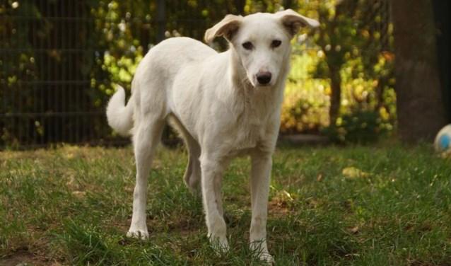 Elke week zet Dierenopvangtehuis De Bommelerwaard een dier in het zonnetje. Deze week is dat Blanca. Kijk voor meer informatie op www.dierenasiel-bommelerwaard.nl