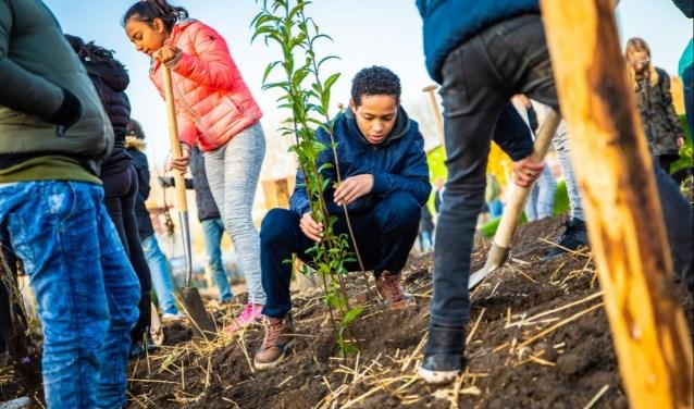 De gemeente Helmond en het IVN zoeken mensen die een Tiny Forest willen helpen aanleggen.