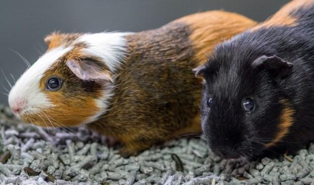 Nicko en Sacho werden gevonden in het bos en zijn nu op zoek naar een fijn thuis.