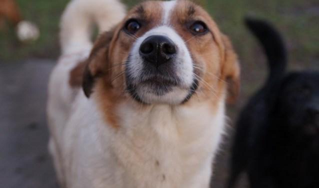 Elke week zet Dierenopvangtehuis De Bommelerwaard een dier in het zonnetje. Deze week is dat Alba.