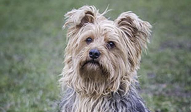 Aandacht voor het reilen en zeilen van een dierenasiel, waar honden  als Toby goed verzorgd worden.