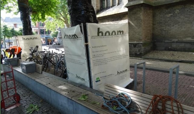 In de zomer van 2017 zijn vijf kastanjebomen op het Grote Kerkplein met succes behandeld tegen de kastanjebloedingsziekte.