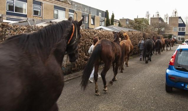 De paarden werden weer gevangen