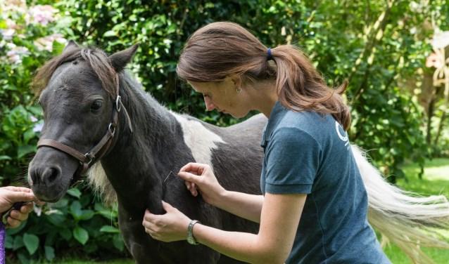 Aan de paardenboulevard ligt ook een heuse fysiotherapiepraktijk. Voor paarden, welteverstaan.