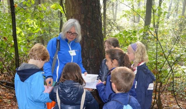 Vrijwilliger leidt kinderen rond in de natuur