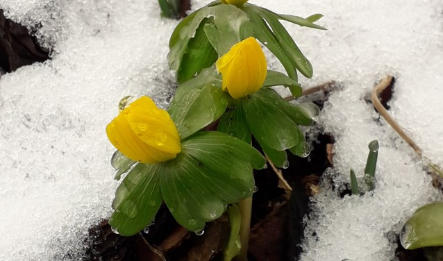 voorjaar in zicht ondanks de sneeuw