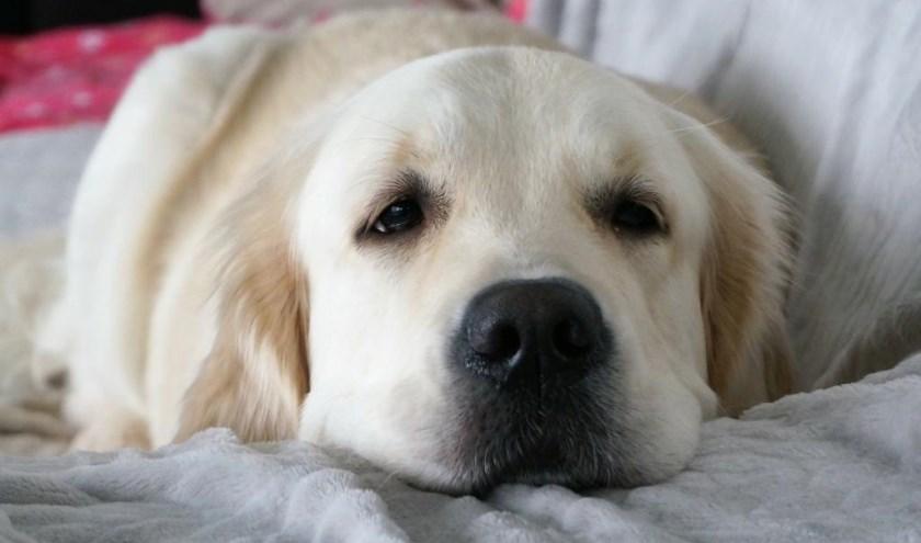 Toos heeft een heel lief, sterk en mooi karakter. Zij is graag in de bossen, speelt met alle honden en houdt van een modderbad.