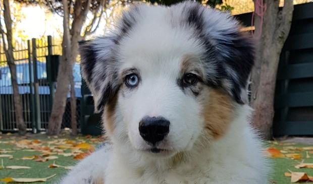 Dit is Jack! Stem op hem via www.mooistehond.nl