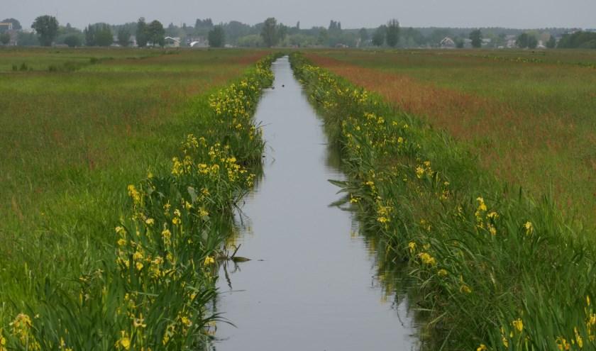 De 2250 hectare 'agrarische' natuur is voor herstel van kruidenrijke graslanden voor zeldzame planten, insecten en weidevogels. (Foto: Jaap Graveland)