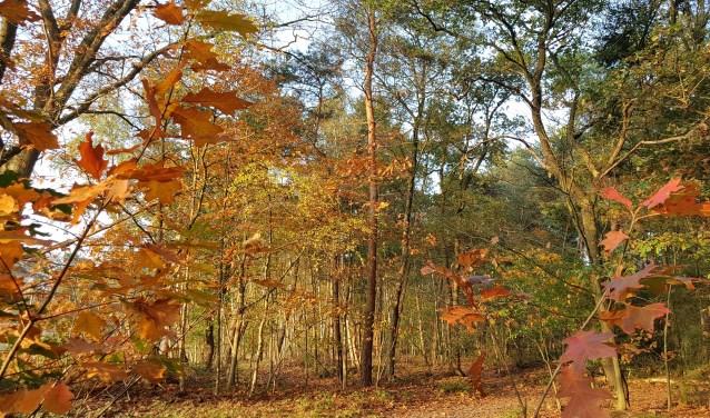 Natuurman Peter Philipsen neemt op 17 maart wandelaars mee de bossen in.