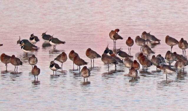 Rustende weidevogels