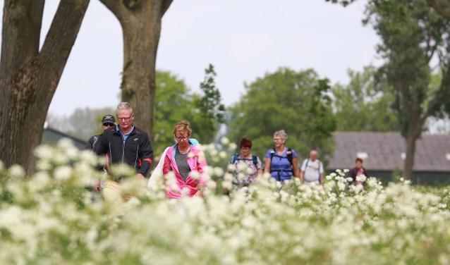 Vierdaagse Alblasserwaard is hét 4 daagse fiets- en wandelevenement in de Alblasserwaard/Vijfheerenlanden. (Foto: Privé)