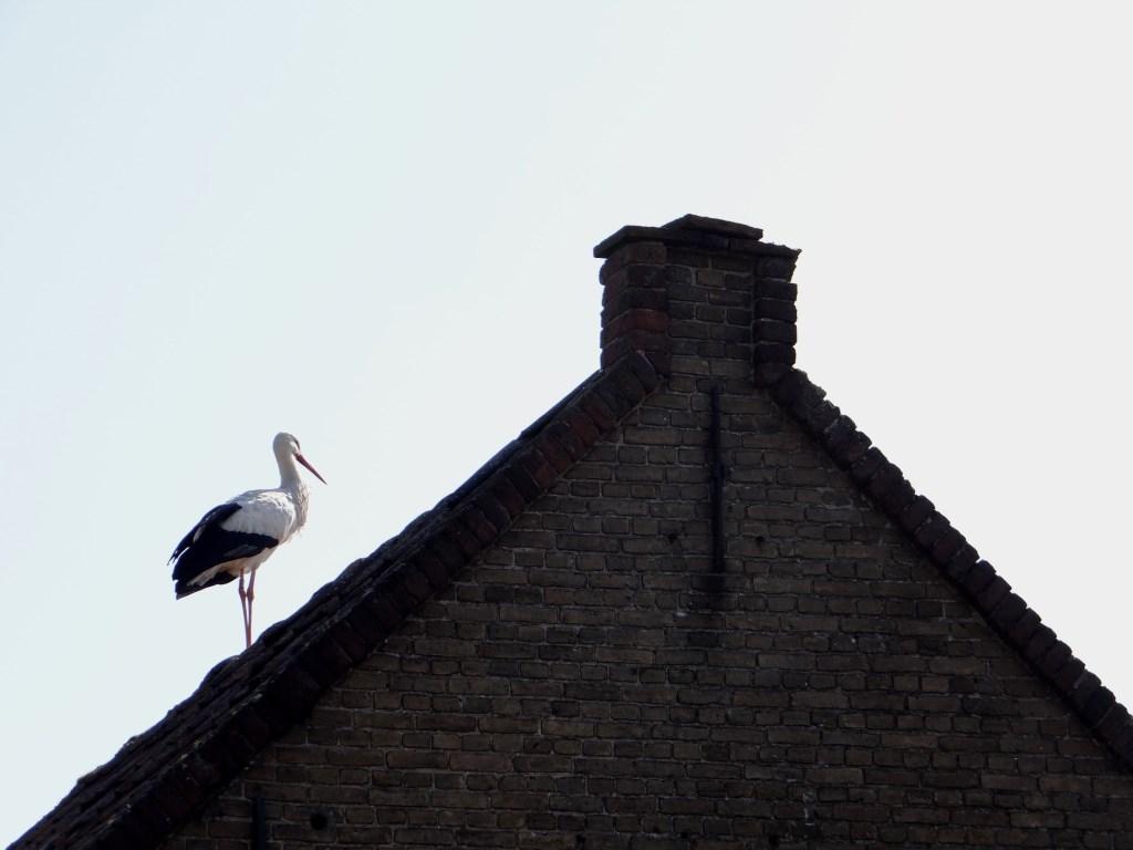 Je kunt het dak op! Foto: Ferry © Persgroep
