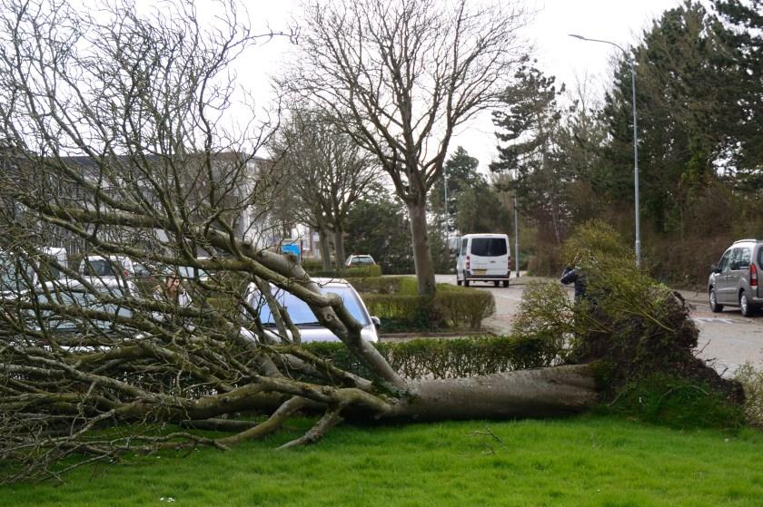 Maar de den was niet de enige boom die daar plat ging door de wind