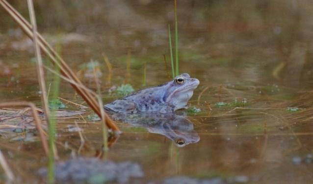 Hans van Moorsel geeft woensdag 3 april bij IVN Geldrop een lezing over amfibieën en reptielen. (Foto: Hans van Moorsel).