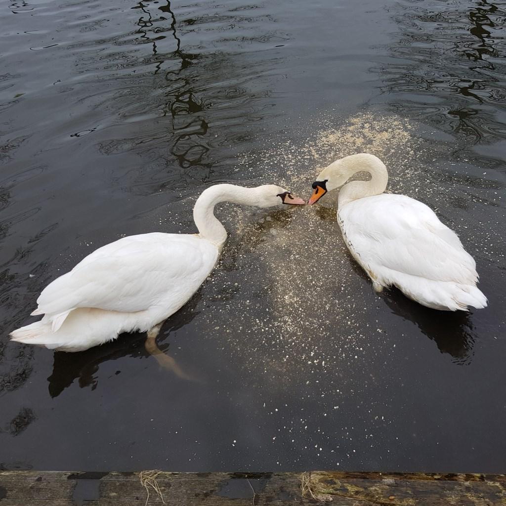 Beauty en Bikkel.  Foto: Agnes Bergevoet  © Persgroep