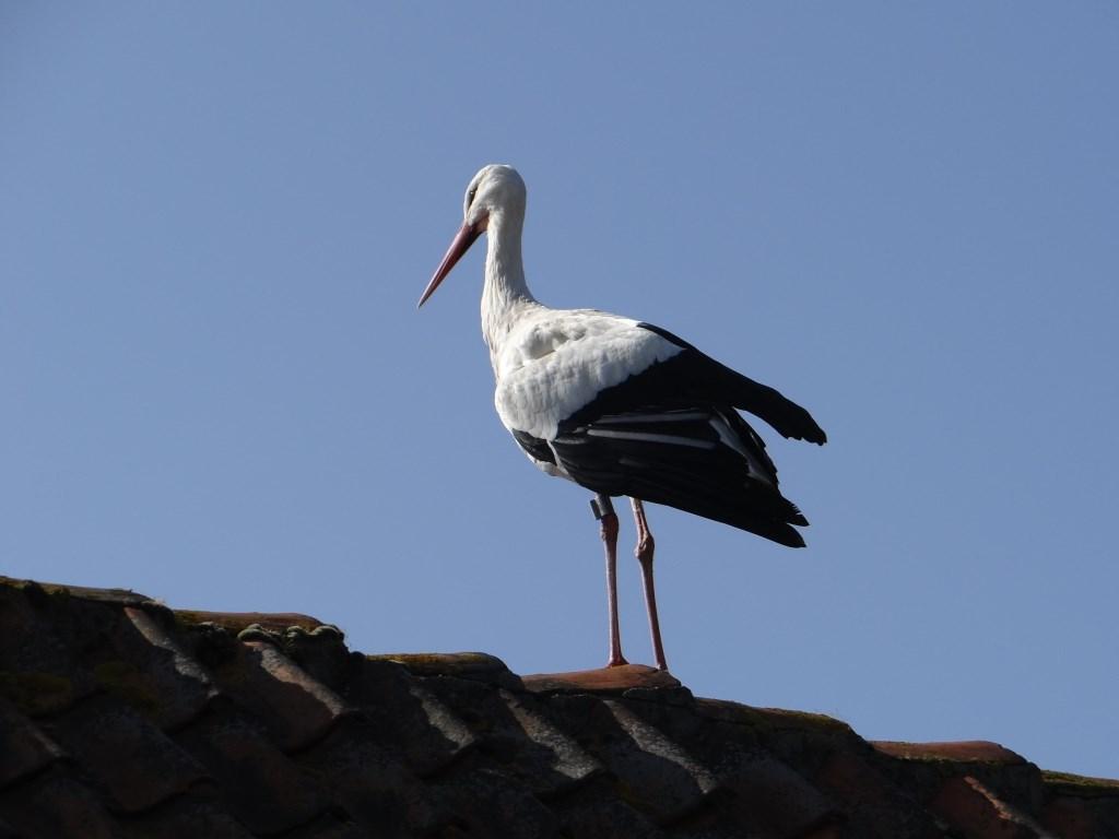 Kom van dat dak af! Foto: Ferry © Persgroep