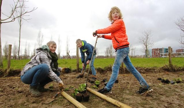Kinderen helpen Frederike Kadijk mee met het planten van vaste bloemen in het park in Westeraam Elst. (foto: Kirsten den Boef)