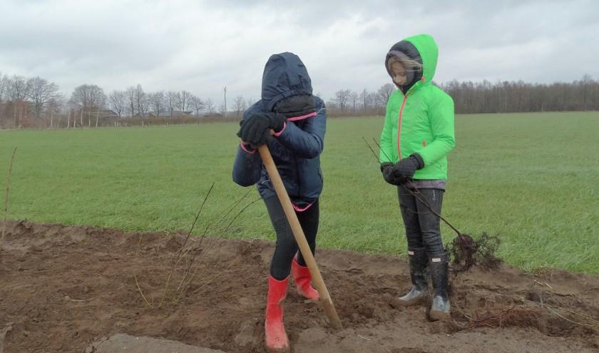 Vlakbij Het Kervel ten westen van Hengelo trotseerden leerlingen uit Toldijk en Hengelo het winderige natte weer om een aardappelveld om te zetten in een terrein met heel veel struiken. (foto: Gerlinde Buiten)