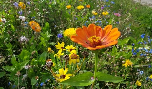 194042251f Lente in de tuin: Zaai het zelf! | De Havenloods