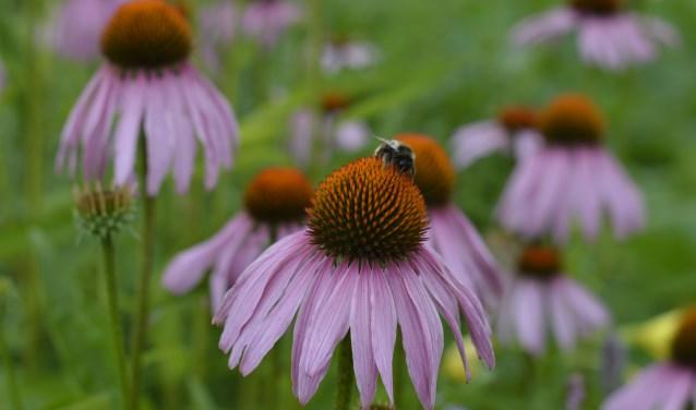 Op de bres voor de bijen, een bijenmengsel is verkrijgbaar bij stichting Natuurhus
