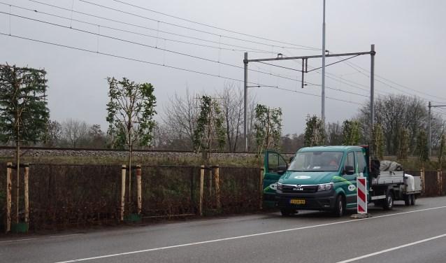 Met het planten van de leibomen is het project Vergroening Brugweg voltooid.
