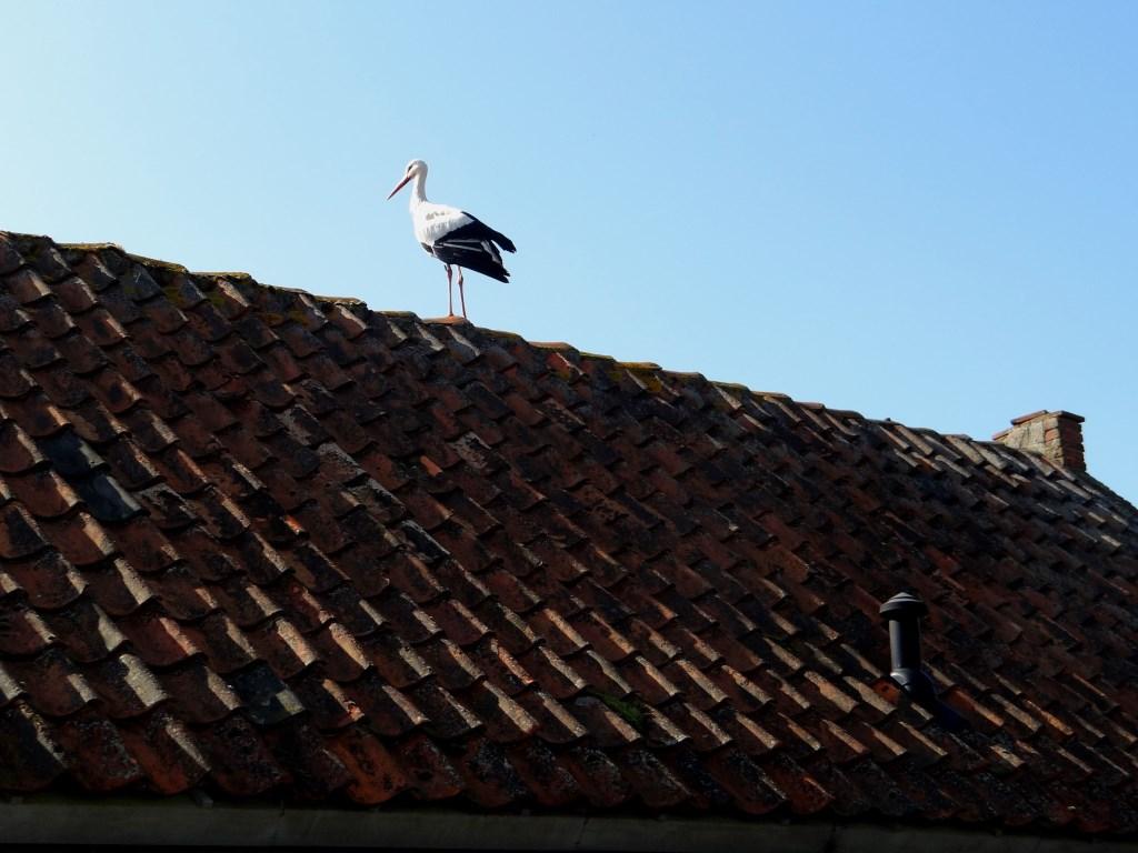 Op het dak Foto: Ferry © Persgroep