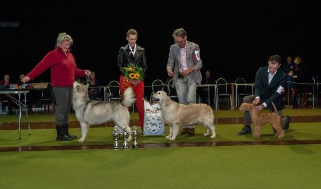 De drie beste honden in de jubileumshow van de KCW in januari.