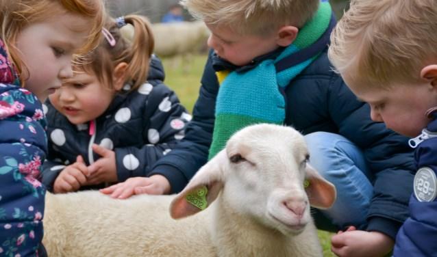Lekker knuffelen met een zacht en rustig lammetje kan op Lammetjesdag.
