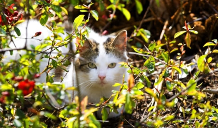 Op camping Droomgaard in Kaatsheuvel leven veel katten en het worden er steeds meer.
