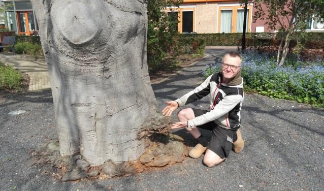 Kunstenaar, boomverzorgen én natuurliefhebber Jos Bregan, onderaan de stam van de 150 jaar oude beuk is de schimmel duidelijk te zien