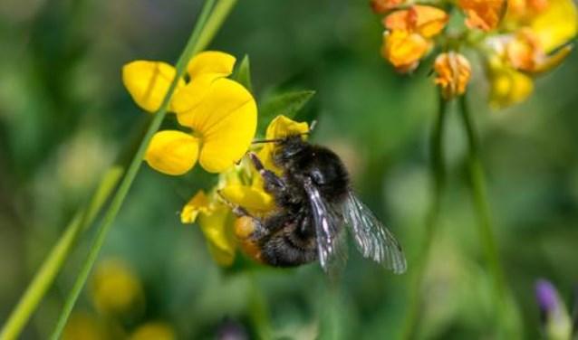 A4 Honey Highway Delft-Schiedam 2018 3e bloei-jaar (foto: Pieter Haringsma).