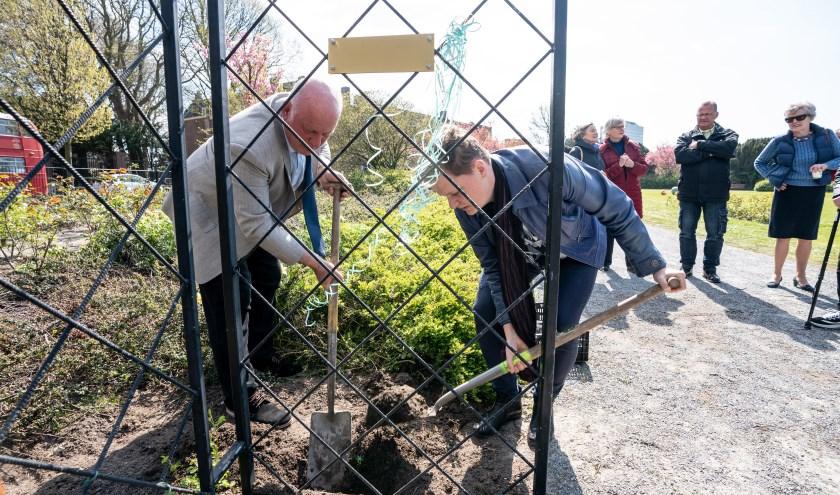 De Gouden Klimroos 'Groei en Bloei' wordt door de kweker, Marco Braun (links), geplant op het Jozef Israëlsplein.