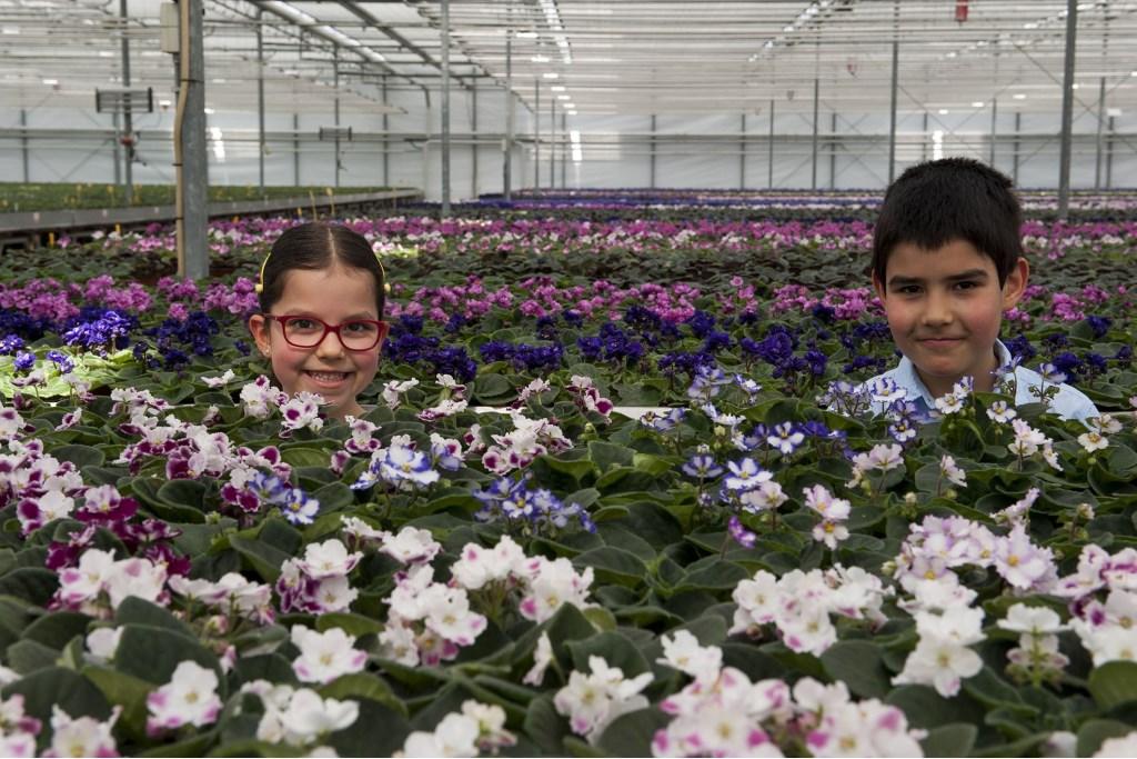 Kleurrijke bloemenpracht is te zien tijdens Kom in de Kas in Oosterhout. (foto: Ellen Koelewijn)