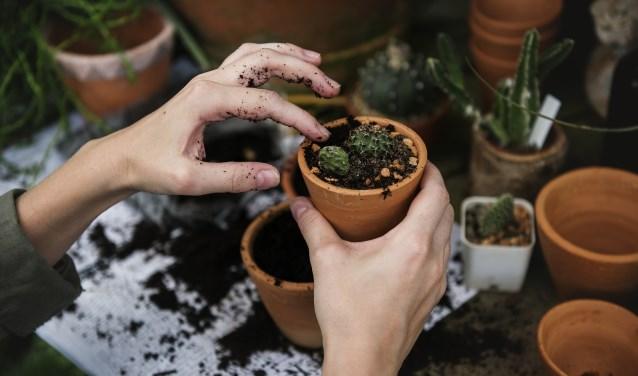 Stichting Flappus zoekt vrijwilligers met groene vingers voor onderhoud aan het groen rond de boerderij.