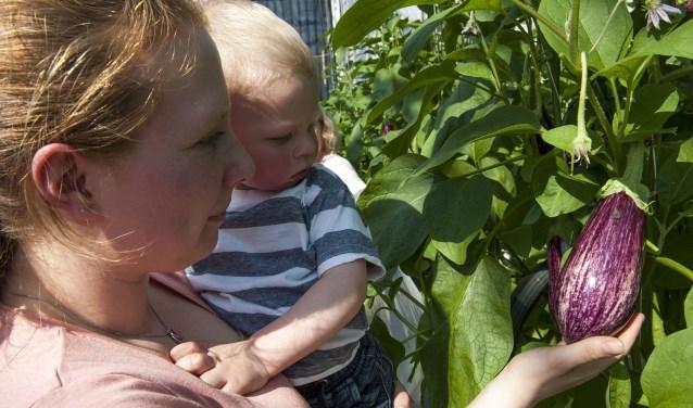 Bezoekers van Kom in de Kas bekijken in Bemmel de paarse gloed van de aubergines. (foto: Ellen Koelewijn)