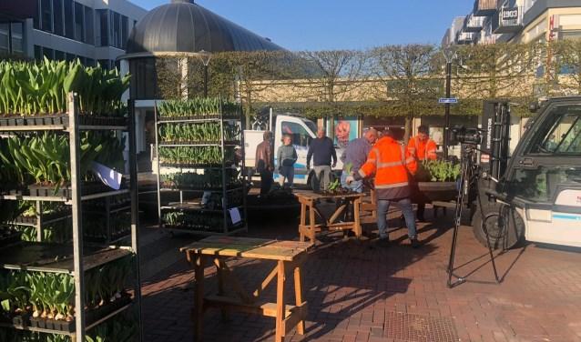De Koornmarkt werd afgelopen donderdag opgefleurd met tulpen