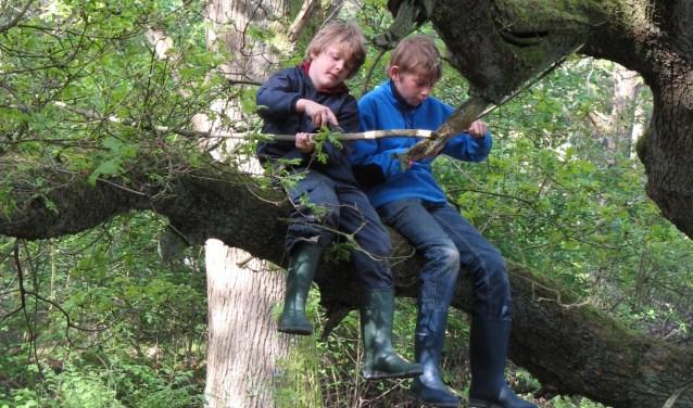 Houd je van bomen, speuren en geheimen? Dan is deze kinderactiviteit echt iets voor jou!