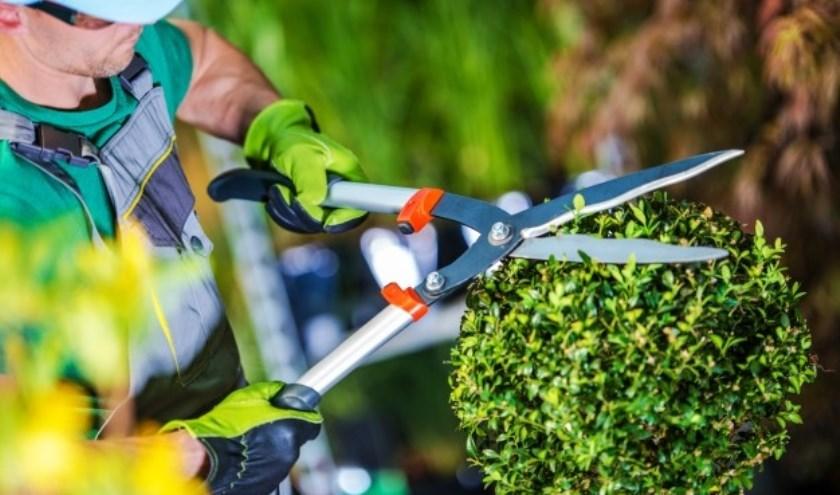 In Veldhoven zijn maar liefst zo'n 6tuinvrijwilligers actief. FOTO: FreePik.