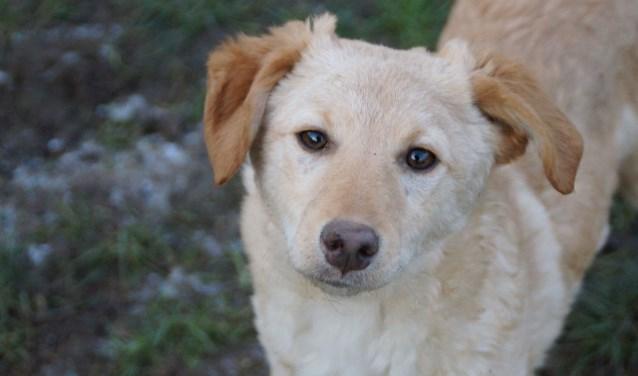 Elke week zet Dierenopvangtehuis De Bommelerwaard een dier in het zonnetje. Deze week is dat Zoi. Kijk voor meer informatie op www.dierenasiel-bommelerwaard.nl