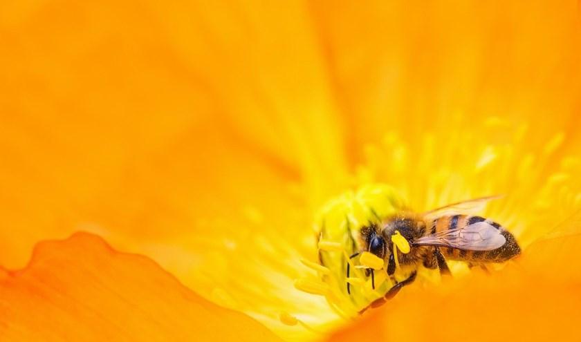De wilde bijen hebben het moeilijk. In de afgelopen jaren zijn hun aantallen sterk teruggelopen.