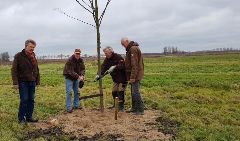 De geplante bomen met vrijwilligers.