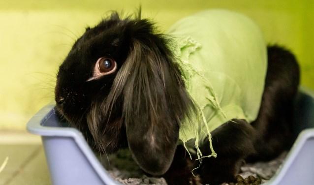 Nera zou graag wortels en andere lekkere hapjes willen delen met een lief konijnenmannetje. Foto: Dierenbescherming.