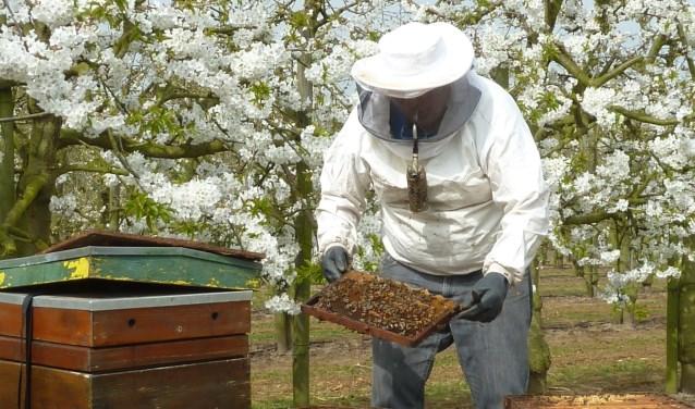 Imkers verhuizen dit voorjaar weer miljoenen honingbijen in hun bijenkasten naar fruitboomgaarden. Foto: Marijke van Ossenbruggen, NFO.